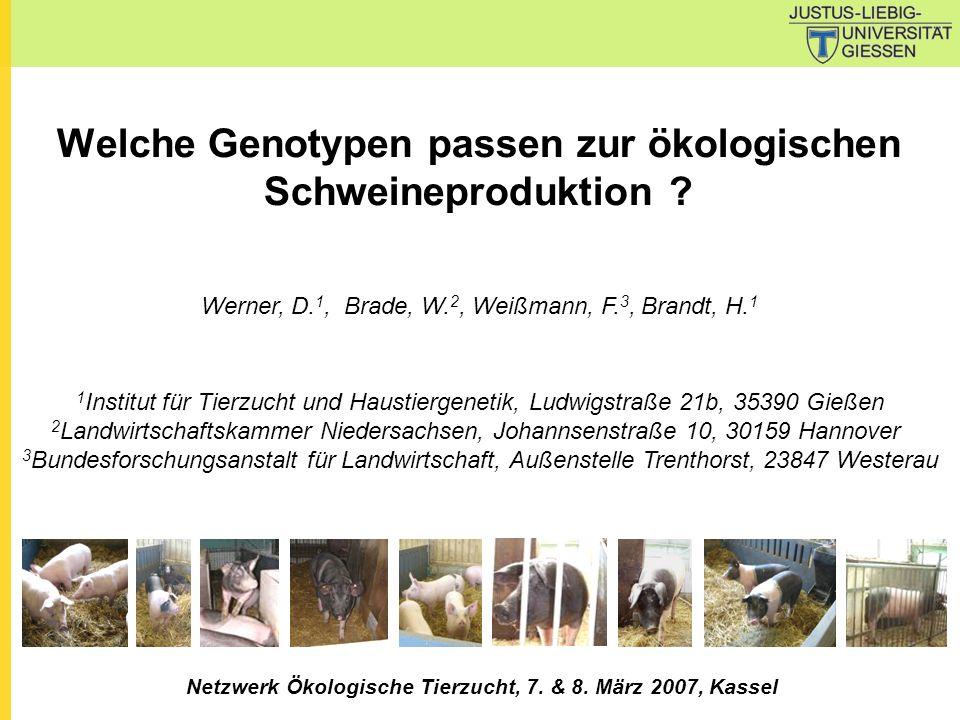 Welche Genotypen passen zur ökologischen Schweineproduktion