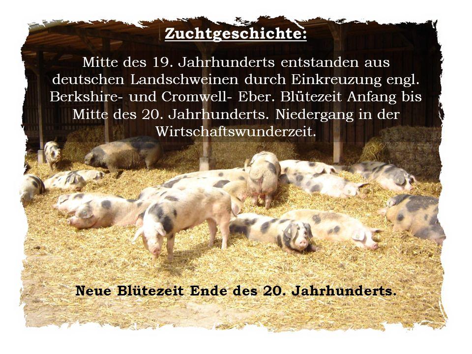 Neue Blütezeit Ende des 20. Jahrhunderts.