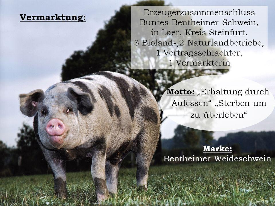 Erzeugerzusammenschluss Buntes Bentheimer Schwein, in Laer, Kreis Steinfurt. 3 Bioland-,2 Naturlandbetriebe, 1 Vertragsschlachter, 1 Vermarkterin