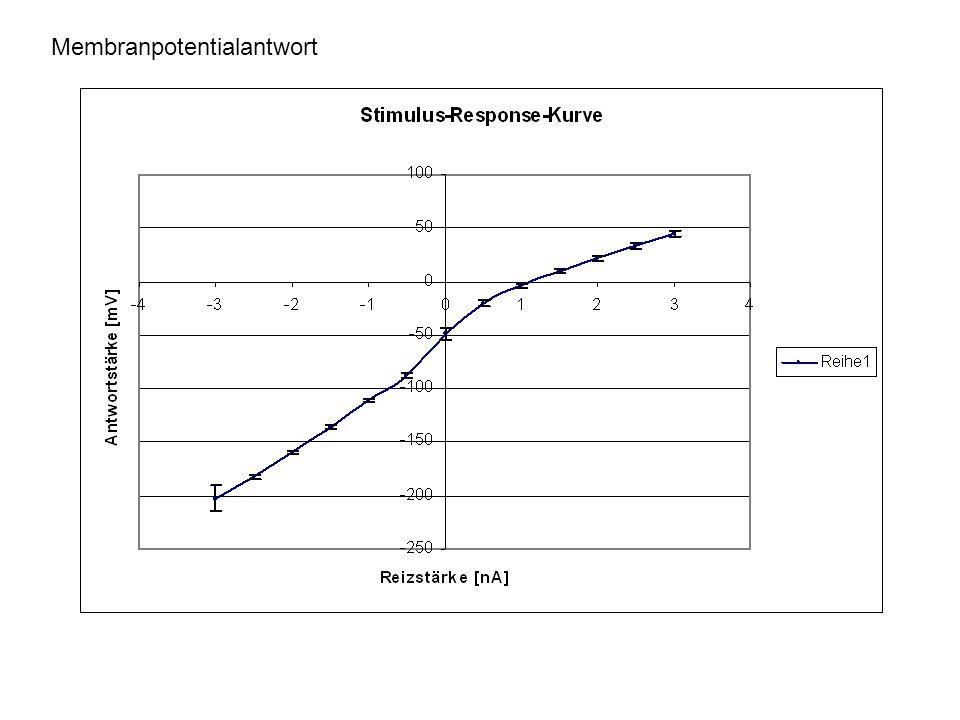 Membranpotentialantwort