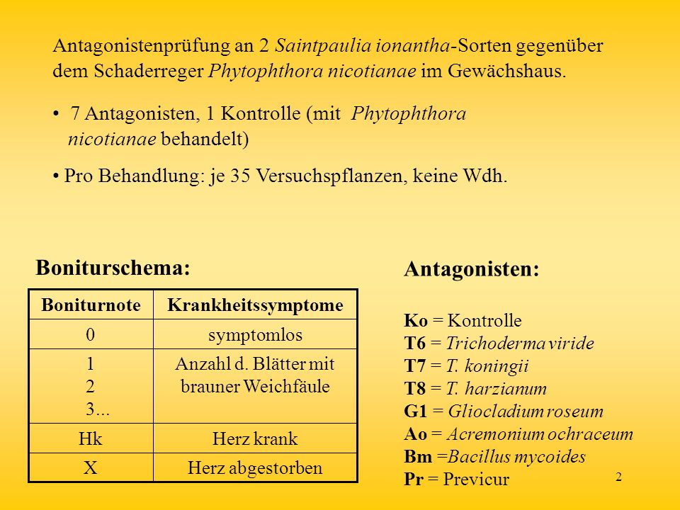 Anzahl d. Blätter mit brauner Weichfäule