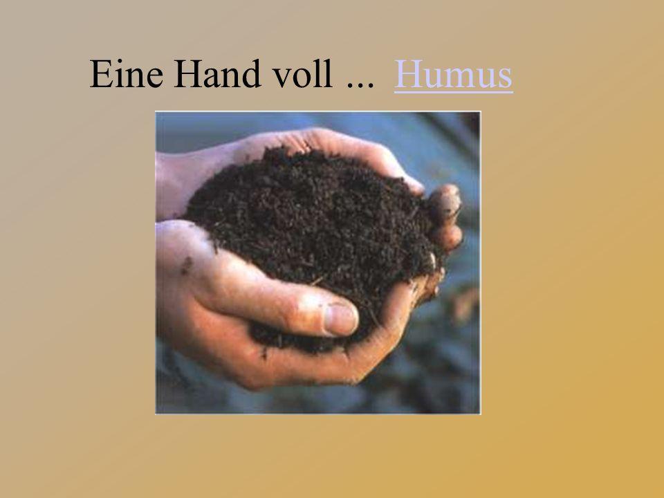 Humus Eine Hand voll ...