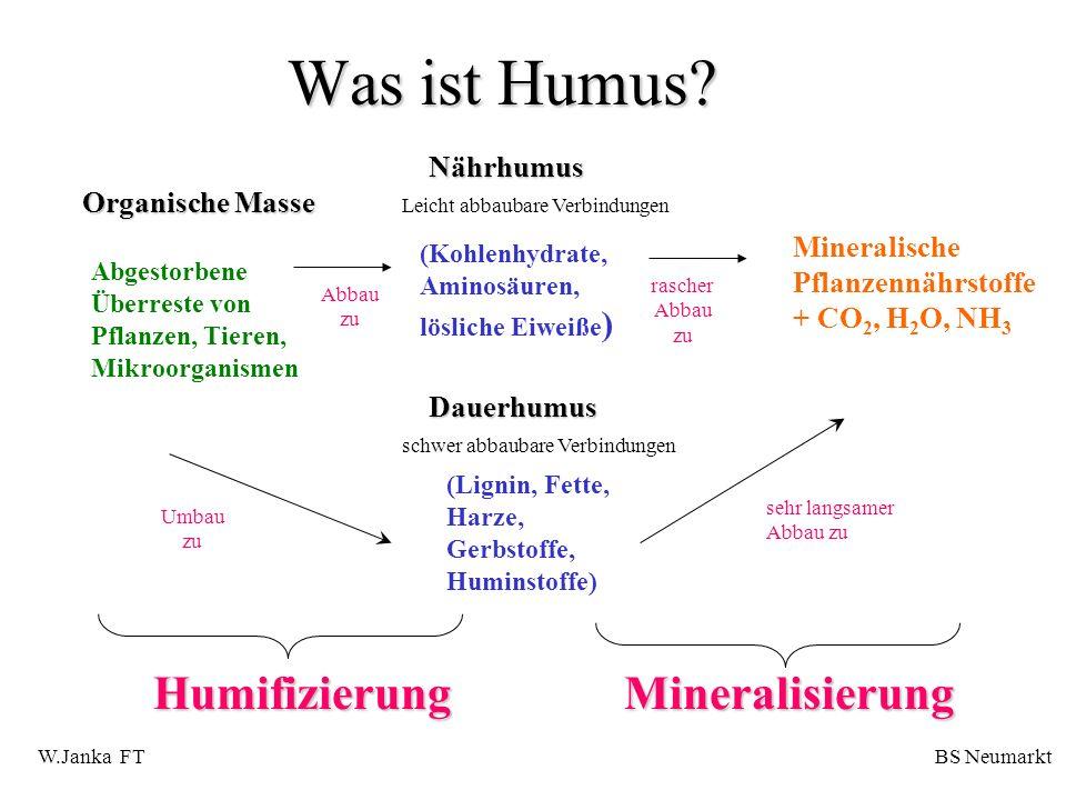 Was ist Humus Humifizierung Mineralisierung Nährhumus