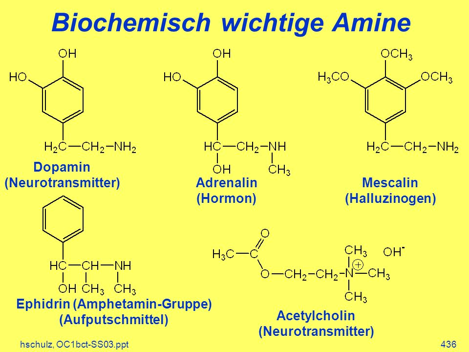 Biochemisch wichtige Amine
