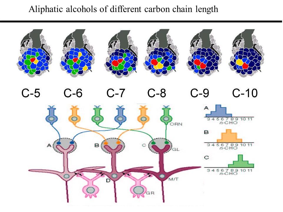 Aliphatic alcohols of different carbon chain length