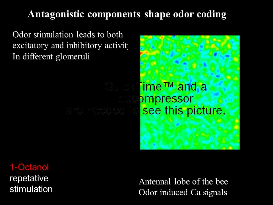 Antagonistic components shape odor coding