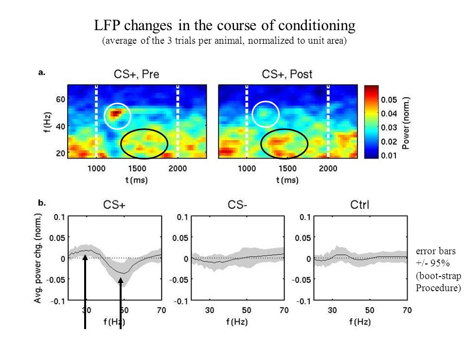 LFP changes in the course of conditioning