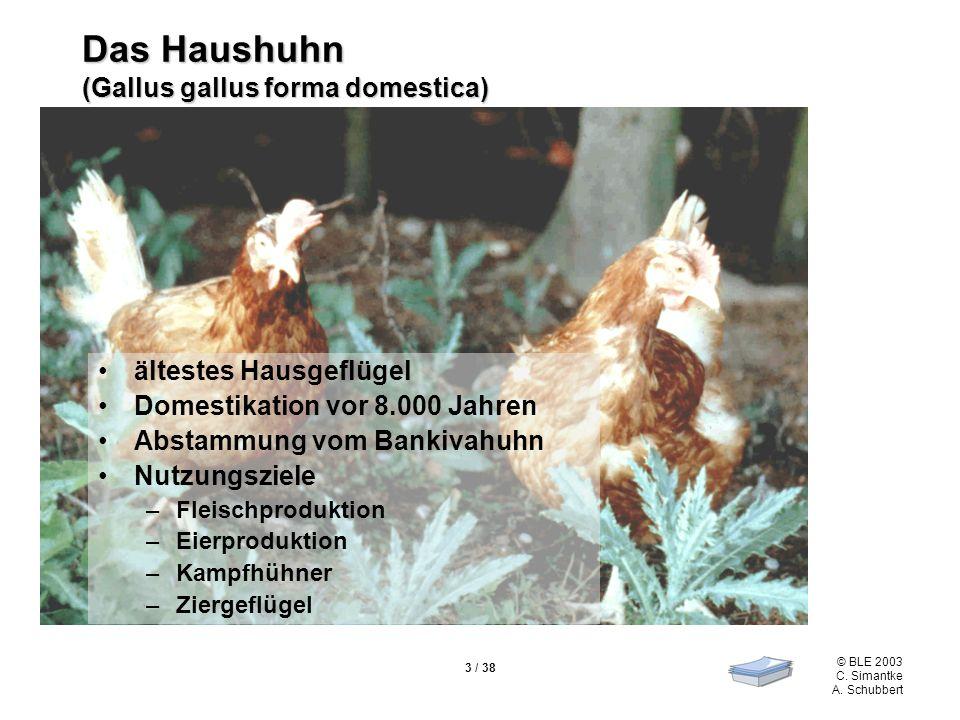 Das Haushuhn (Gallus gallus forma domestica)