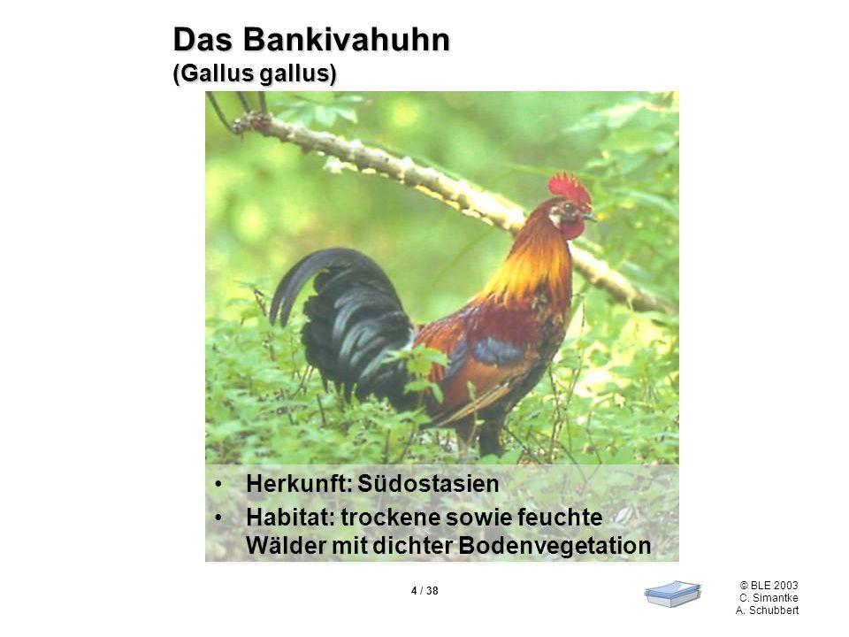 Das Bankivahuhn (Gallus gallus)