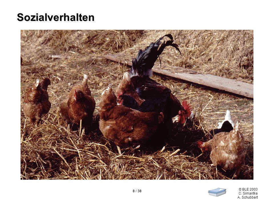 Sozialverhalten Folie 8 zeigt ein Kleingruppengefüge bei der Futteraufnahme.