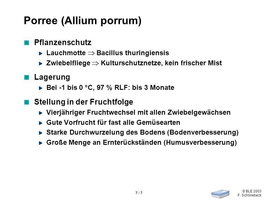 Porree (Allium porrum)