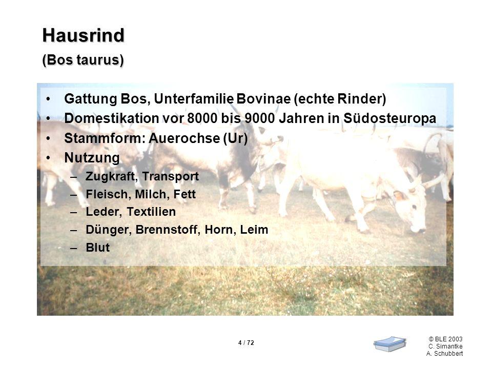 Hausrind (Bos taurus) Gattung Bos, Unterfamilie Bovinae (echte Rinder)