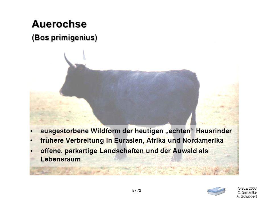 Auerochse (Bos primigenius)