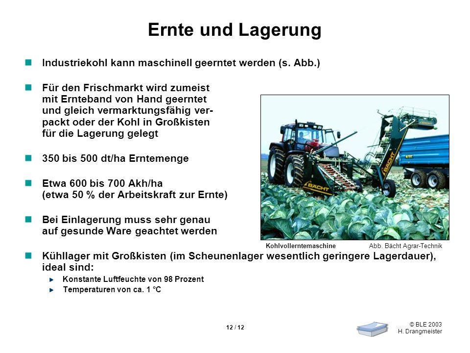Ernte und Lagerung Industriekohl kann maschinell geerntet werden (s. Abb.)