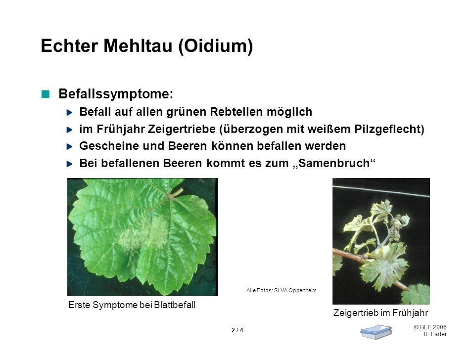 Echter Mehltau (Oidium)