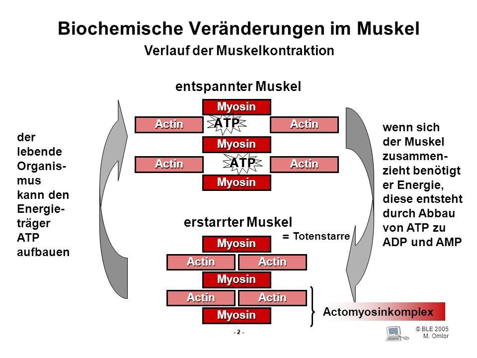 Biochemische Veränderungen im Muskel