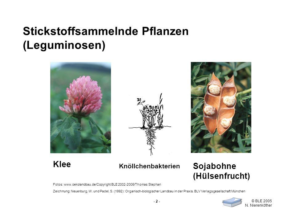 Stickstoffsammelnde Pflanzen (Leguminosen)