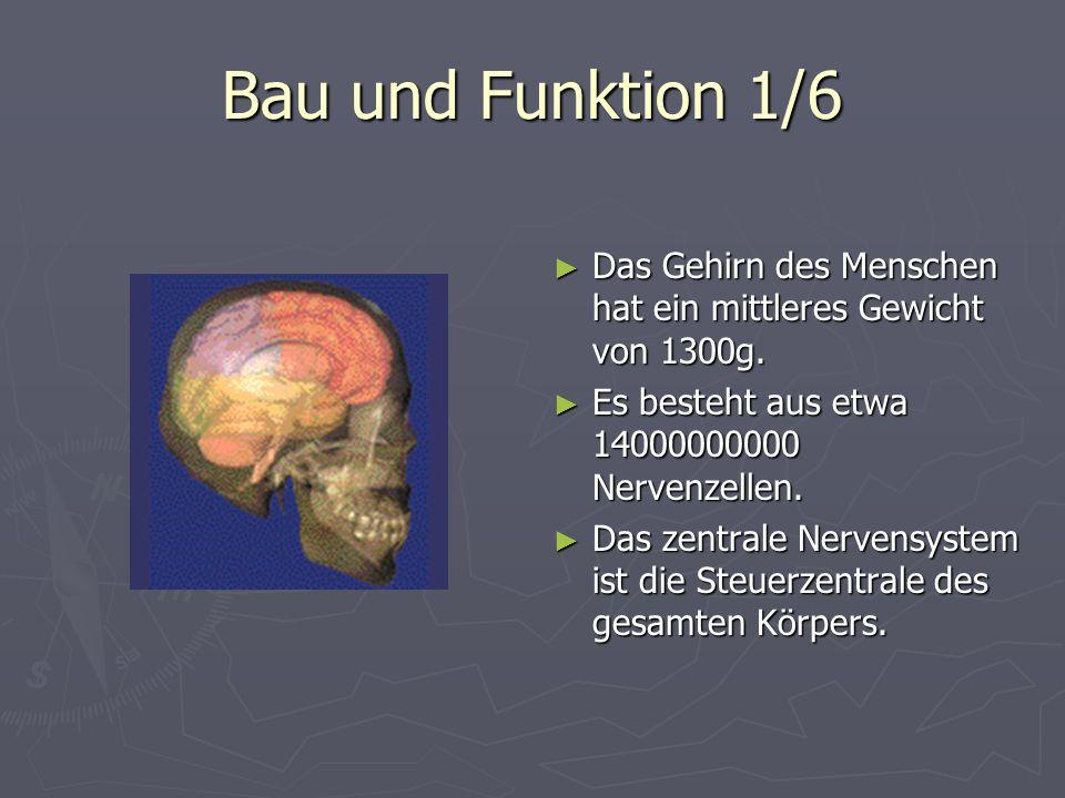 Bau und Funktion 1/6 Das Gehirn des Menschen hat ein mittleres Gewicht von 1300g. Es besteht aus etwa 14000000000 Nervenzellen.