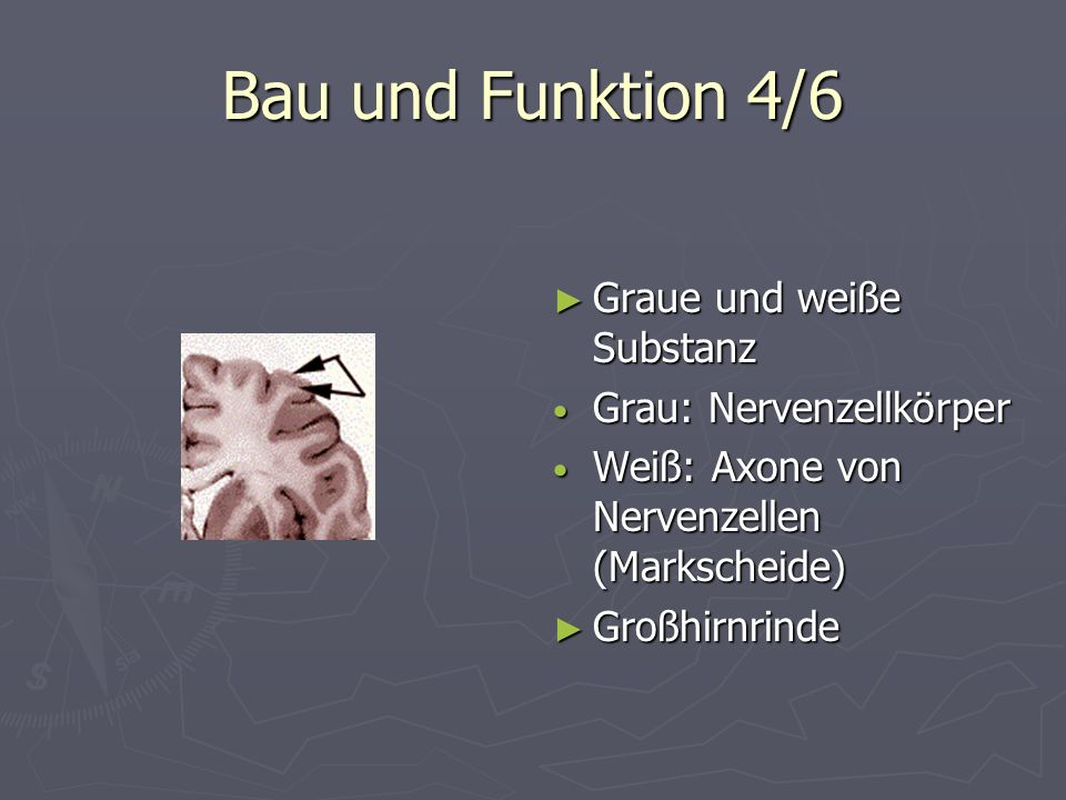 Bau und Funktion 4/6 Graue und weiße Substanz Grau: Nervenzellkörper