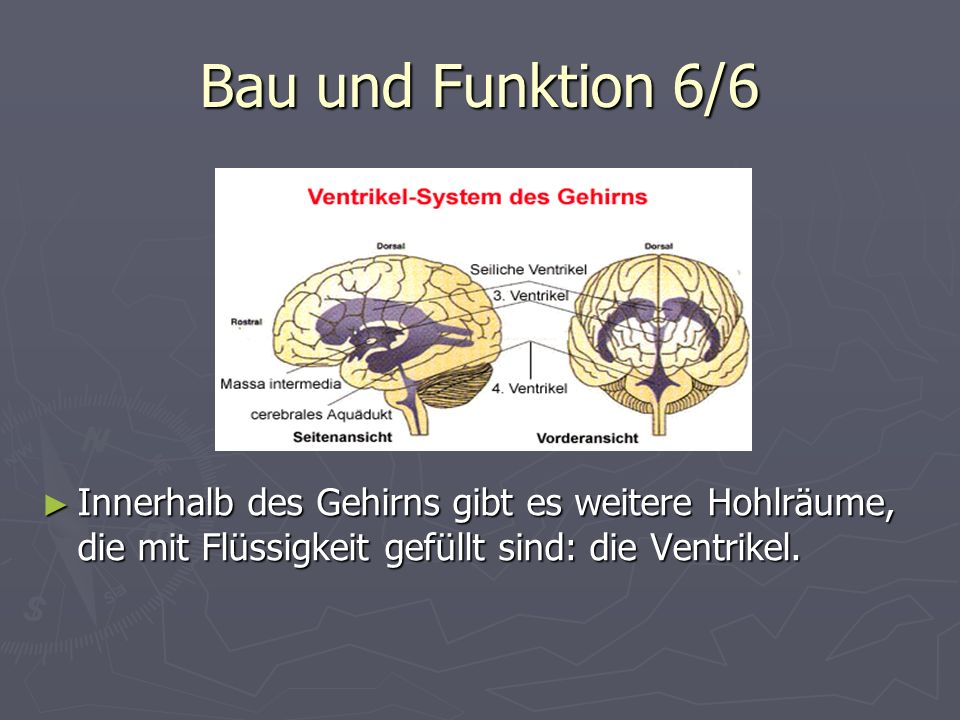 Bau und Funktion 6/6Innerhalb des Gehirns gibt es weitere Hohlräume, die mit Flüssigkeit gefüllt sind: die Ventrikel.