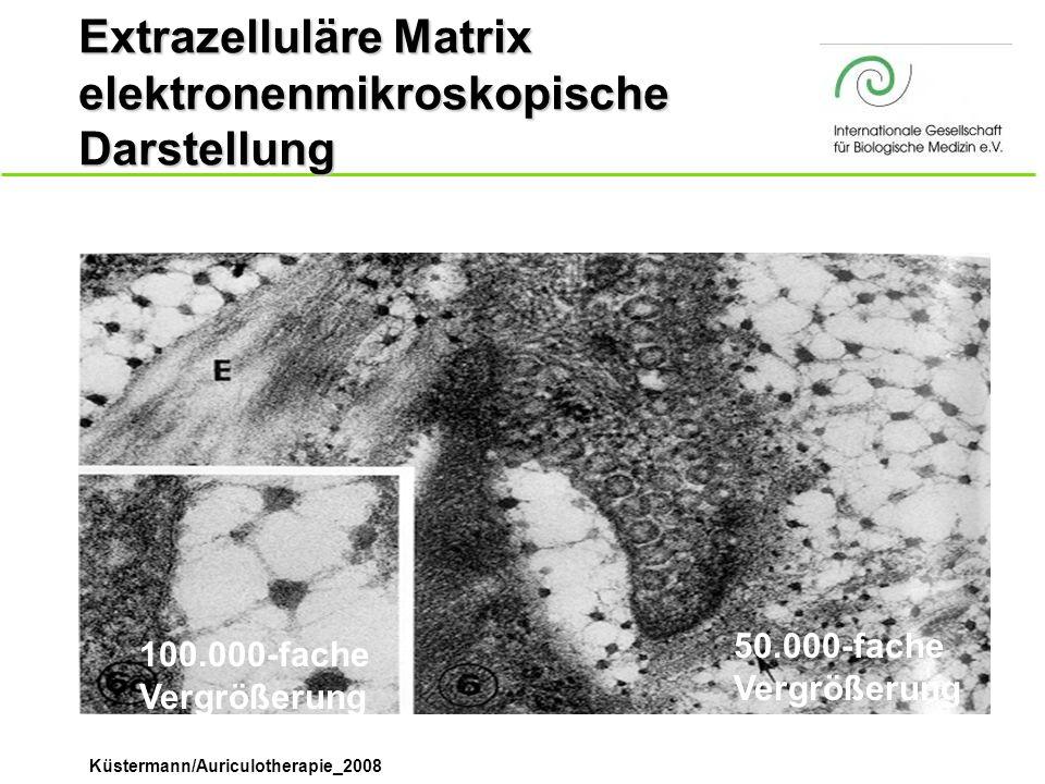 Extrazelluläre Matrix elektronenmikroskopische Darstellung
