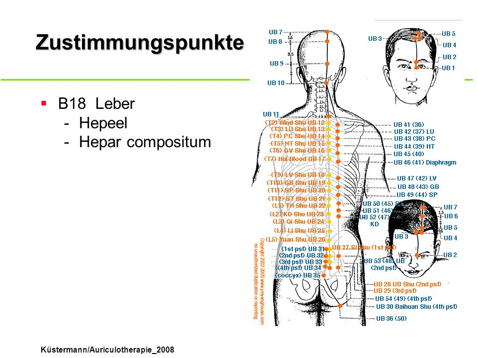 Zustimmungspunkte B18 Leber Hepeel Hepar compositum