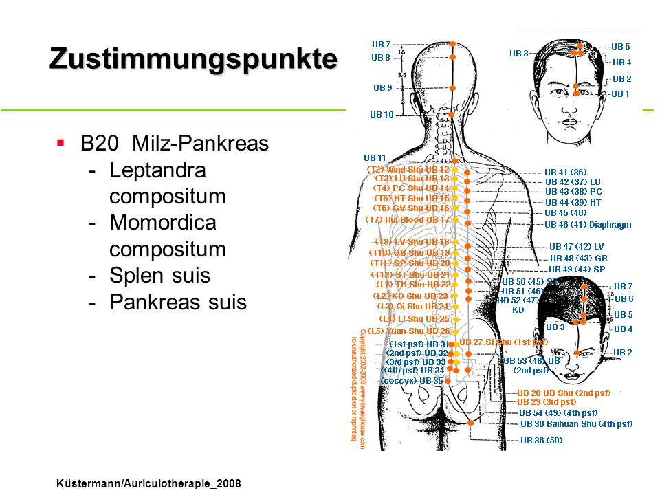 Zustimmungspunkte B20 Milz-Pankreas Leptandra compositum