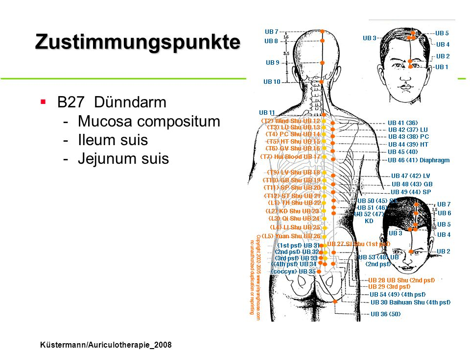 Zustimmungspunkte B27 Dünndarm Mucosa compositum Ileum suis