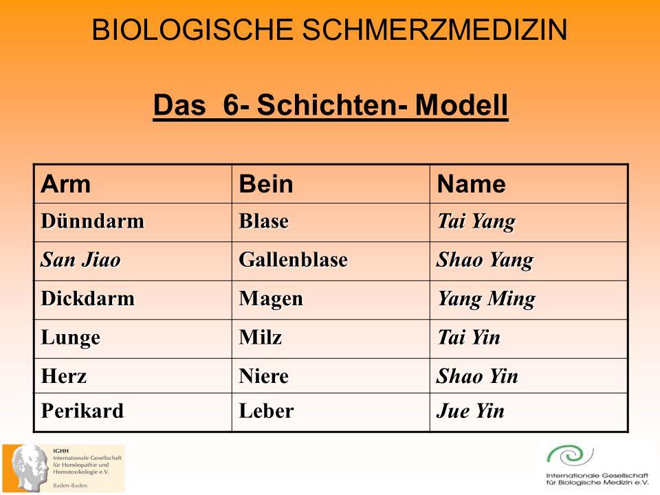 Das 6- Schichten- Modell