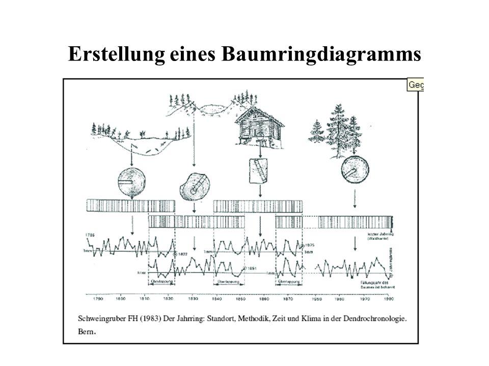 Erstellung eines Baumringdiagramms