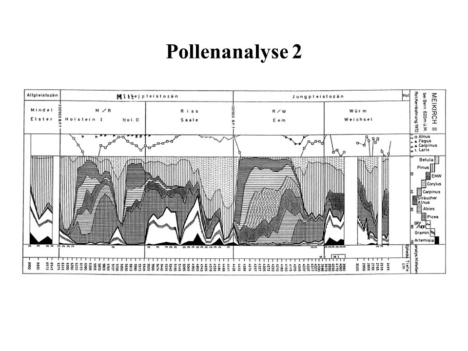 Pollenanalyse 2