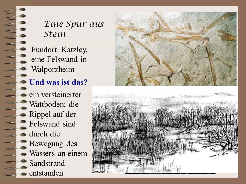 Eine Spur aus Stein Fundort: Katzley, eine Felswand in Walporzheim. Und was ist das