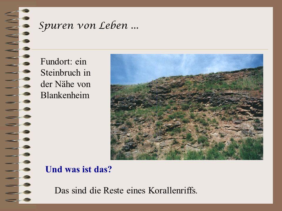 Spuren von Leben ... Fundort: ein Steinbruch in der Nähe von Blankenheim.