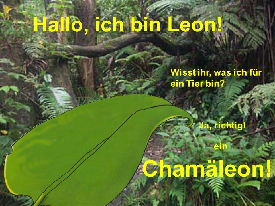 Chamäleon! Hallo, ich bin Leon! Wisst ihr, was ich für ein Tier bin
