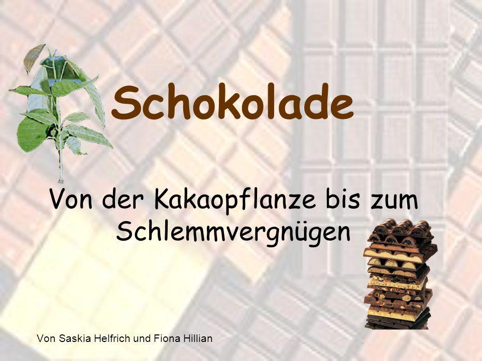 Schokolade Von der Kakaopflanze bis zum Schlemmvergnügen