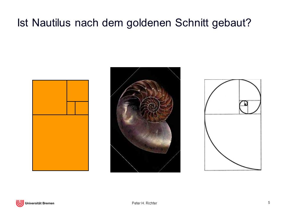 Ist Nautilus nach dem goldenen Schnitt gebaut