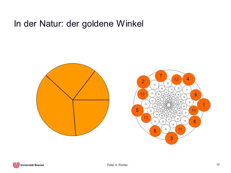 In der Natur: der goldene Winkel