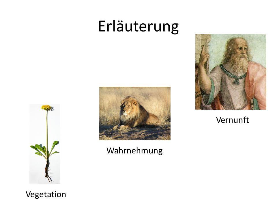 Erläuterung Vernunft Wahrnehmung Vegetation