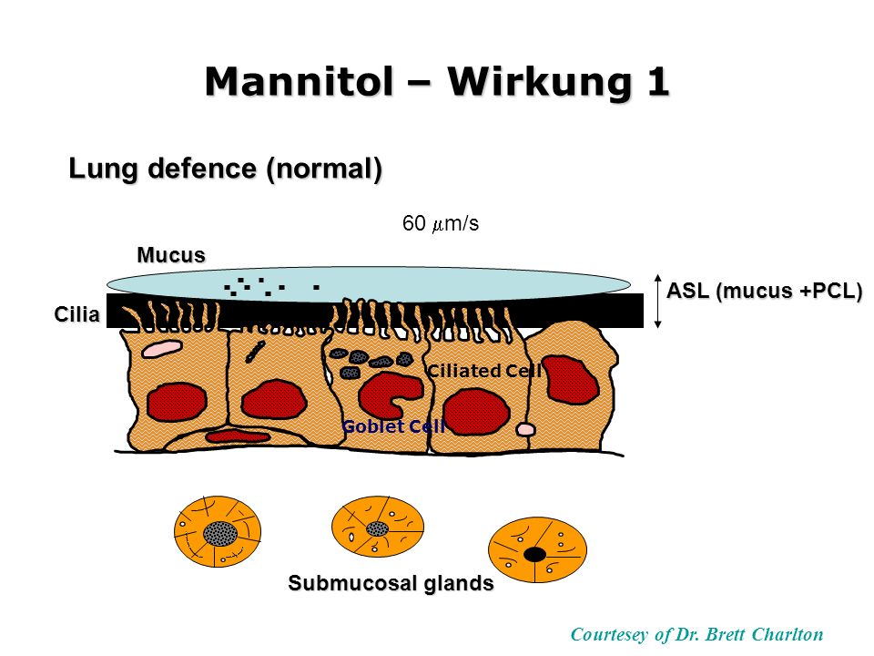 Mannitol – Wirkung 1 Courtesey of Dr. Brett Charlton