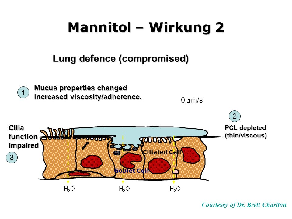 Mannitol – Wirkung 2 Courtesey of Dr. Brett Charlton