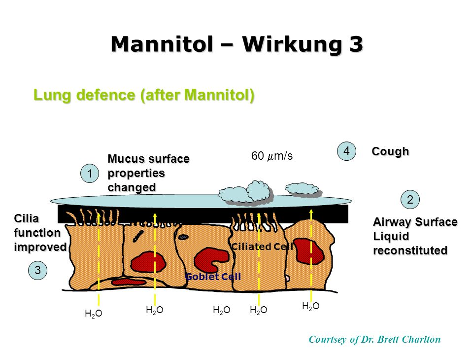 Mannitol – Wirkung 3 Courtsey of Dr. Brett Charlton