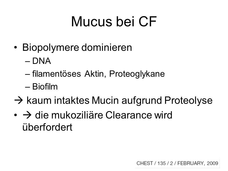 Mucus bei CF Biopolymere dominieren
