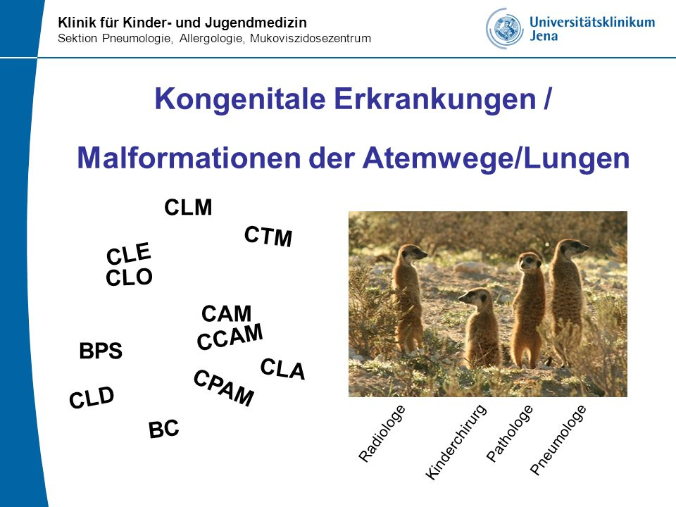 Kongenitale Erkrankungen / Malformationen der Atemwege/Lungen