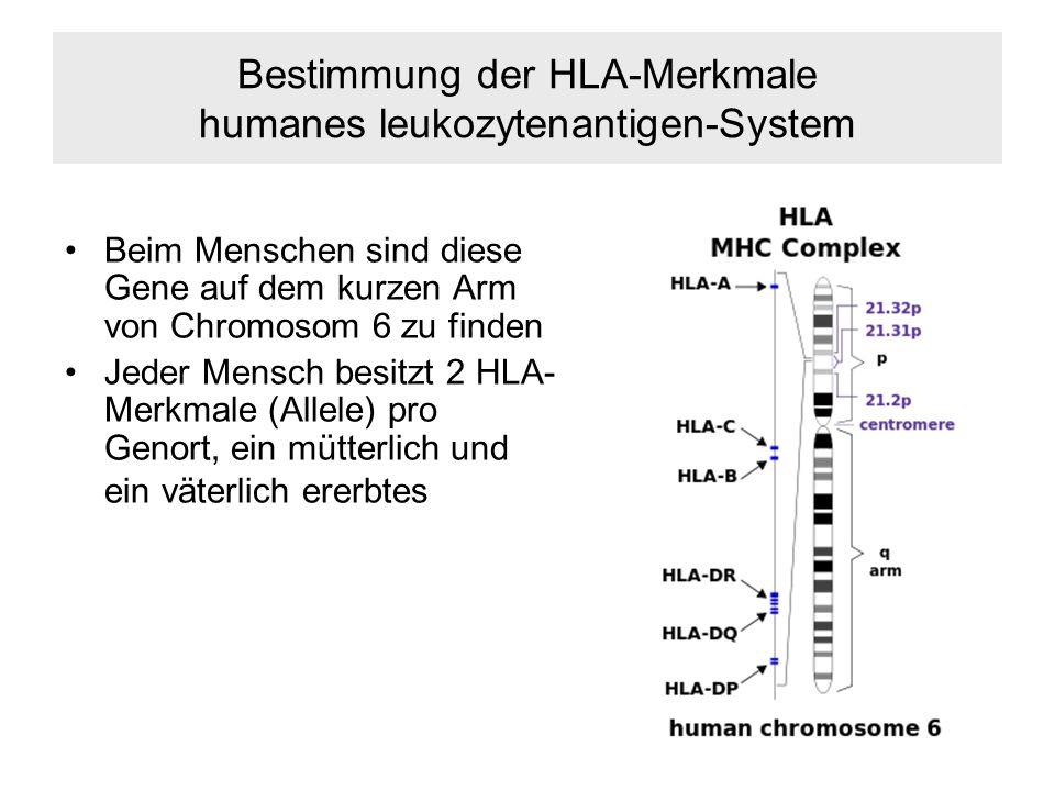 Bestimmung der HLA-Merkmale humanes leukozytenantigen-System