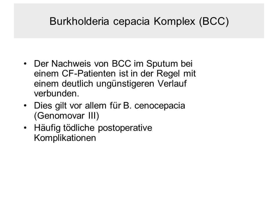 Burkholderia cepacia Komplex (BCC)