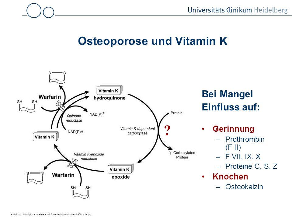 Osteoporose und Vitamin K