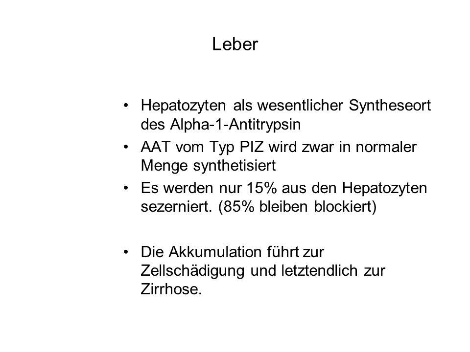 Leber Hepatozyten als wesentlicher Syntheseort des Alpha-1-Antitrypsin