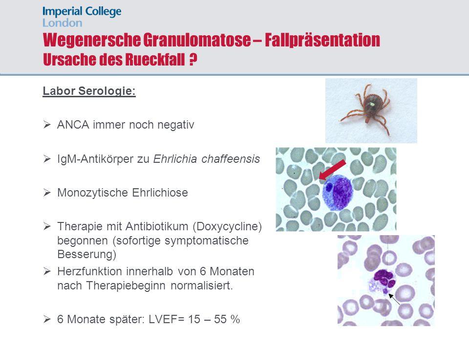 Wegenersche Granulomatose – Fallpräsentation Ursache des Rueckfall