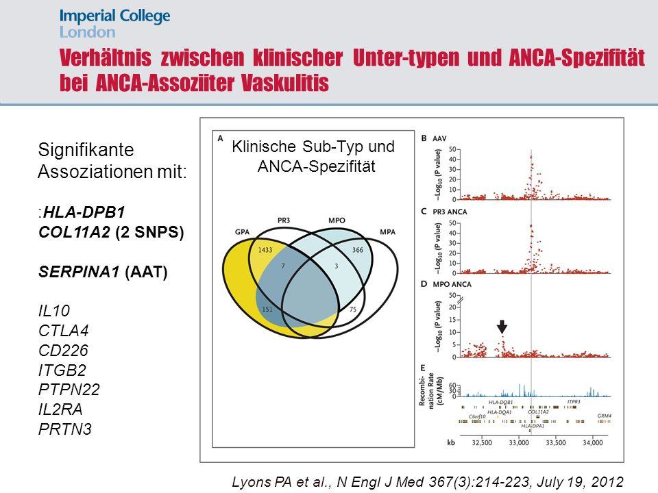 Verhältnis zwischen klinischer Unter-typen und ANCA-Spezifität bei ANCA-Assoziiter Vaskulitis