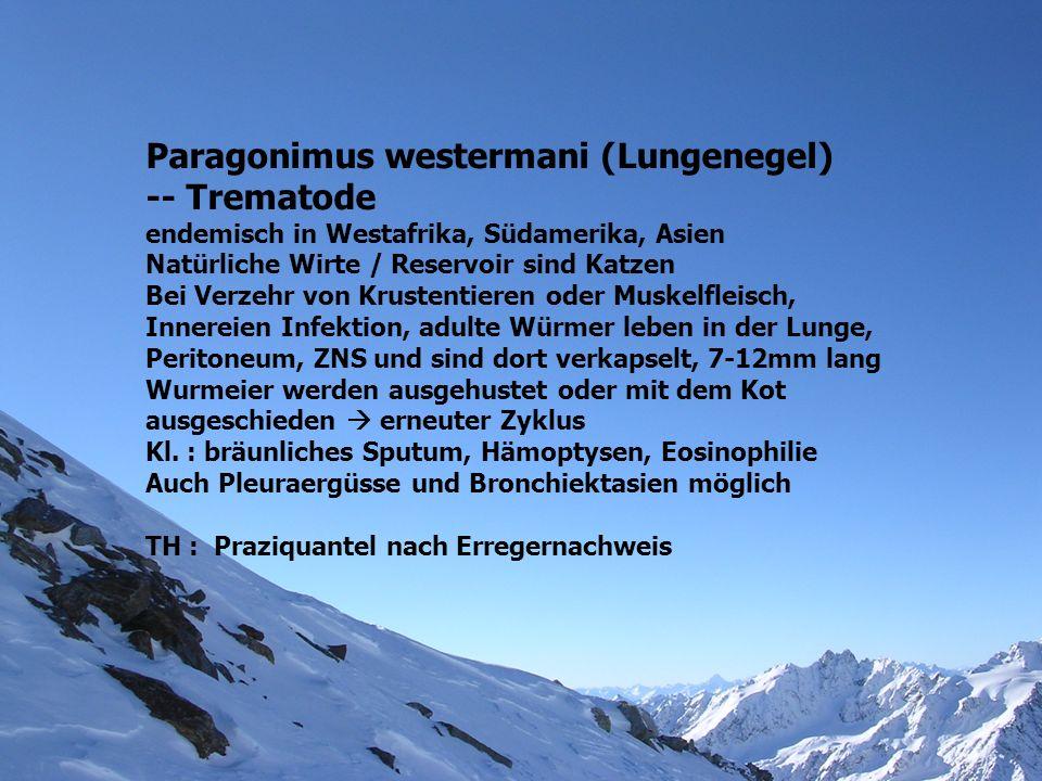 Paragonimus westermani (Lungenegel) -- Trematode